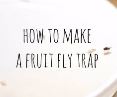 Picture of Easy Fruit Fly Trap Hiding Spots, Fruit Flies, Fly Traps, Helpful Hints, Diy, Life Hacks, Trellis, Frugal, Cage