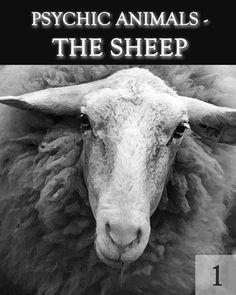 Dag 520 - Stabiliseren met de ondersteuning van een schaap