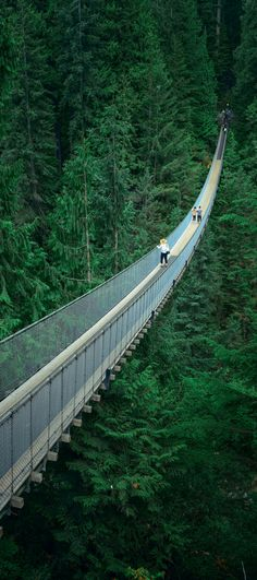 Capilano Suspension Bridge in Vancouver, Canada! Hope you aren't afraid of heights! Vancouver is easily one of the most beautiful cities in the world! Explore more of the best things to do in Vancouver, BC on Avenlylanetravel.com. #canada #travel