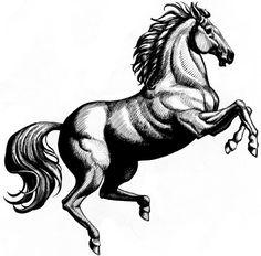 http://www.philippepayet.com/images/ILLUSTRATIONS/cheval.jpg