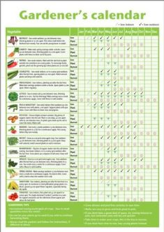 Homemade* A3 novice gardener's/beginner's vegetable growing gardening calendar (folded to A4), ideal small gift for mother's day, father's day, classrooms or schools offering horticultural lessons NOT LAMINATED: Amazon.co.uk: Kitchen & Home