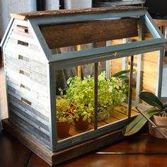 Herb garden terrarium, not going to pay nearly $500 for one though... Ima make my OWN!