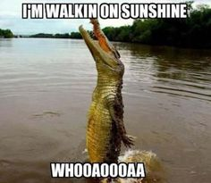 funny alligator | Good Day To Be An Alligator