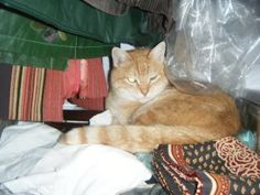 Tiziano...15 years with us. One day he decided that our home had to be also hits