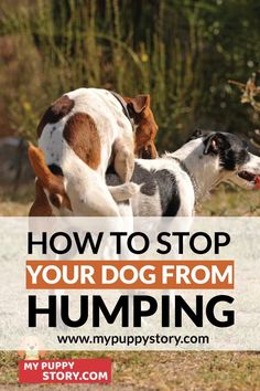 How To Stop Your Dog From Humping? - My Puppy Story