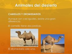 Habitats, Deserts, Animals, Desert Animals, Camels, Ancient Egypt, Toddler Activities, Saint Joseph, Morocco