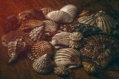Shells - null