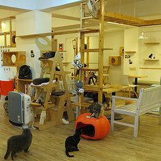 Japanese Cat Cafes | 16 Of The Weirdest Themed Restaurants In The World