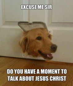 I would be more willing to listen to a dog...