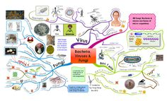 Bacteria, Viruses & Fungi free mind map download - link doesn't work but its a  nice example
