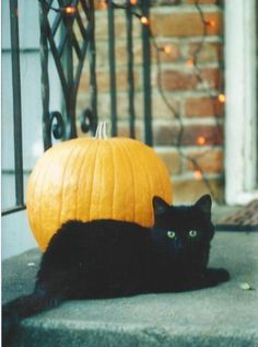 Black cat and pumpkin I Love Cats, Crazy Cats, Cool Cats, Animals And Pets, Cute Animals, Image Chat, Halloween Cat, Happy Halloween, Here Kitty Kitty