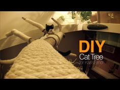 Loving cat owner built a cat tree from real tree - Three Million Dogs