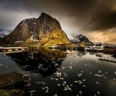 Birds soar on a cloudy day in the Loften Islands, Norway. Photograph byLior Yaakobi