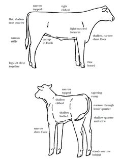 update you beef cattle body parts worksheet with this new