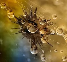 Dew drops photography by Andrew Osokin