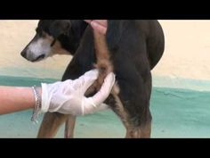 Video Guide - How to Empty (Express) a Dog's Anal Glands