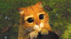 Los 10 gatos más adorables de la red - Cooperativa.cl