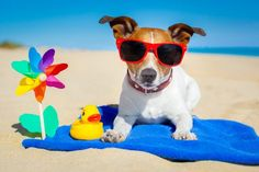 Who needs a vacation?  This summer is all about taking a staycation with your four-legged-bestie!  Get your summer started with a weekend getaway or a family holiday to one of our handpicked dog friendly destinations.   #holiday #visitbritain #dogfriendly #dogfriendlytravel #SouthEngland