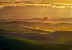 Small Forest, Palouse Hills | Well, you guys are probably si… | Flickr