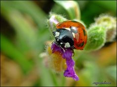 the angle of ascent achieved, phew! by Olympus, via Flickr