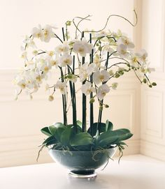 PHALAENOPSIS IN GLASS from Winward Home