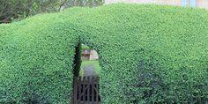 Hedge  HAVEFOLKET: KREATIVE ENGELSKE HÆKKE