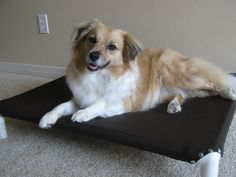 Picture of Build a Dog Cot for around $10