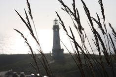 Utility Pole, Lighthouse, Scenery, Bell Rock Lighthouse, Light House, Landscape, Lighthouses, Paisajes, Nature