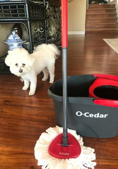 Image result for maltese dog, sweep and vacuum more dog hair