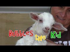 Bubbles the Kid (+playlist)