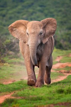elefantes | Tumblr