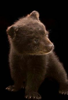 Beautiful Grizzly Cub!