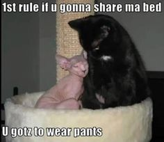 Where are your pants strange naked cat?!?