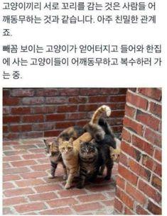 트위터글/여러가지글/웃긴글 : 네이버 블로그 Punny Puns, Funny Images, Animal Pictures, Dog Cat, Kittens, Cute Animals, Humor, Pets, Medical Imaging