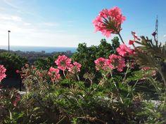 Flores de la verbena en primavera con el jardín y el mar de fondo