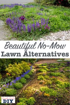 Tired of spending beautiful summer days mowing your lawn? Want a more environmentally friendly, drought tolerant grass alternative? I share the process I used to replace my ugly lawn with pretty and practical no mow lawn alternatives. No Grass Yard, No Grass Backyard, Front Yard Landscaping, Backyard Landscaping, Landscaping Ideas, Backyard Ideas, Garden Ideas, Porch Ideas, Arizona Landscaping