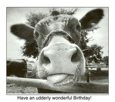 132 Best Birthday Cards Images On Pinterest Anniversary Cards