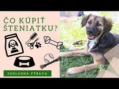 Čo kúpiť pred tým, než si domov prinesieme šteniatko 🐾 - YouTube Animals, Instagram, Youtube, Animales, Animaux, Animal, Animais, Youtubers, Dieren