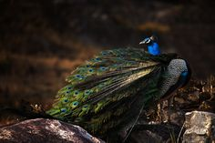 Show Time by Jassi Oberai on 500px