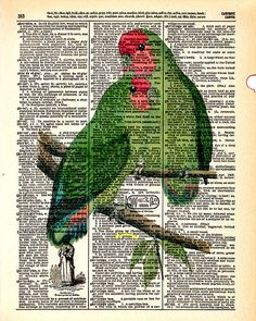Rosy-Faced Lovebird   Vintage Dictionary Book by KFLGetsHerFunkOn