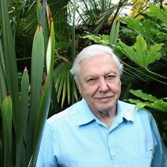 David Attenborough to present 'Planet Earth 2' in 2016 - NME - nme.com