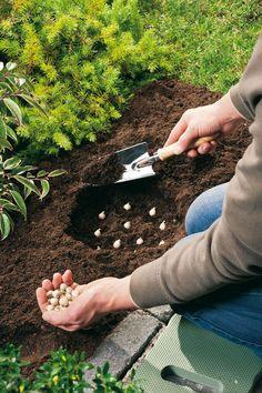 Bloembollen planten in het najaar. De beste tijd om bloembollen te planten is tussen half oktober en eind november. #herfst #bloembollen #planten Bekijk meer tips op www.tuinen.nl