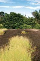 Afloramiento rocoso del Escudo Guayanés. En las depresiones de la roca desnuda se acumulan agua y nutrientes que permiten el desarrollo de u...