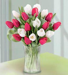 #tulipes rouges et blanches avec vase