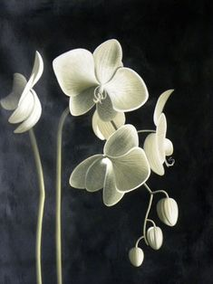 Black White and Sage Orchid Oil Painting - contemporary - Originals And Limited Editions - Noa's Art- Mobile Art Gallery