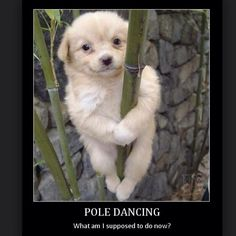 Us at every Pole Jam trying to figure out the new pole tricks we've found on Instagram. Next Pole Jam is this Friday the 3rd 8-11pm. #pole #poledance #polefit #polefitness #poletrick #whatamisupposedtodonow #polememe #howdidshegetupthere #howdidhedothat #wheredoesmyhandgo #stuck #polejam #poleplay #cle #cleveland #clevelandexoticdance #ced #fb