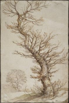 Abraham Bloemaert(Dutch) Study of a Tree