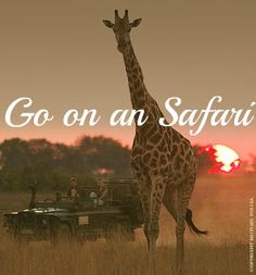To go on an African Safari