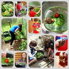 Making Snail Gardens