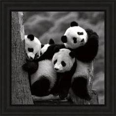 Delimont 'Pandas' Framed Print - 14024947 - Overstock.com Shopping - The Best Prices on Framed Prints